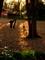 晩秋の糺の森@下鴨神社