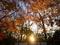 日落ちる糺の森@下鴨神社