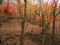 晩秋の瓜生山