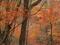 鹿に紅葉@瓜生山