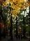 晩秋の糺の森