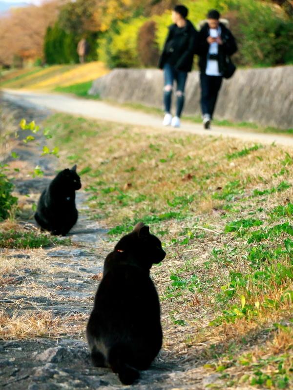 黒衣の2匹と2人@加茂川