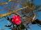 青空に咲く@京都府立植物園