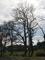 賀茂川河川敷の裸木