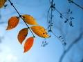 秋の名残@京都府立植物園