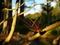 紅葉落ち枝も赤@京都府立植物園