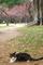 梅園の猫@京都御苑
