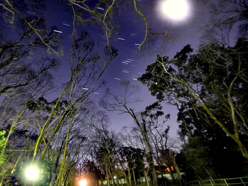 糺の森を行く冬の星座@下鴨神社
