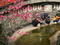 光琳梅と水御籤を引く人たち@下鴨神社