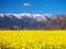 黄色の大地と雪の比良@守山第一なぎさ公園