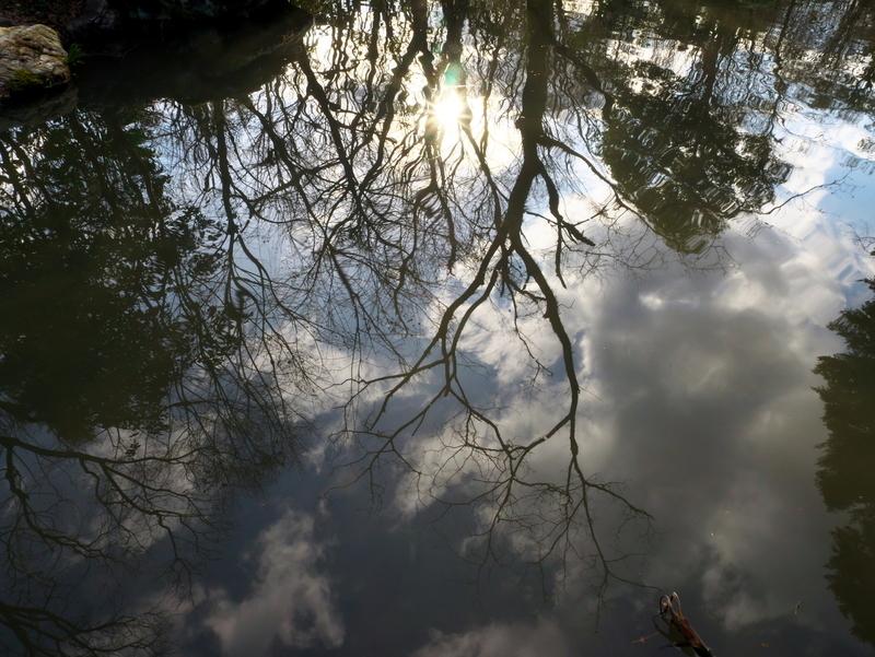 池の中の空@京都府立植物園
