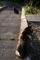 猫二匹@哲学の道