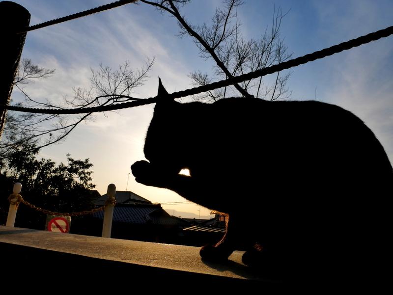 夕暮れの猫@哲学の道