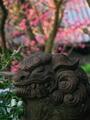 狛犬と紅梅@下御霊神社