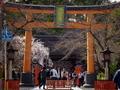 魁桜咲く平野神社