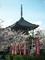 桜咲く本法寺