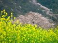 春の色@嵐山