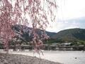 桜咲く渡月橋@嵐山