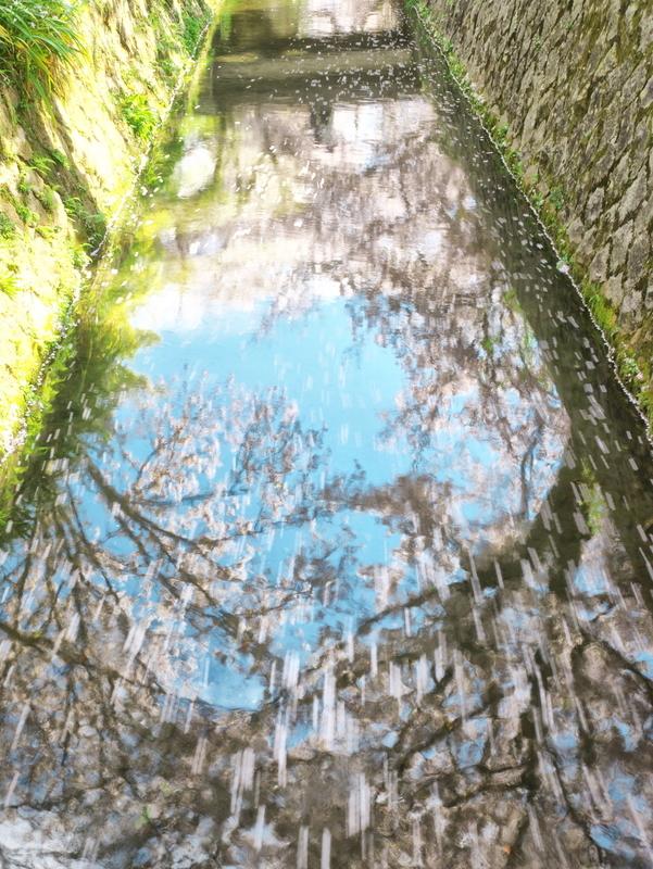 桜の流れ@哲学の道