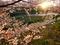 桜のある夕暮れ@賀茂川