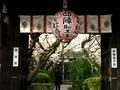 雨宝院の桜3