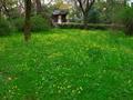 ウマノアシガタ咲く京都御苑