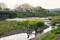 菜の花咲く賀茂川