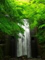 新緑に落ちる水@修学院音羽川
