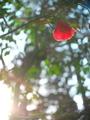 赤いランプ@瓜生山