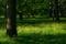 ウマノアシガタ咲く林床@京都御苑
