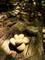 木漏れ日に咲く石の花@木野