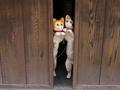 招き猫@二寧坂