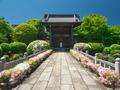 妙満寺のツツジ3