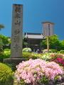 妙満寺のツツジ6
