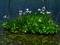 深泥池のカキツバタ23