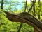 木の横顔@京都北山