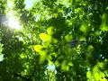 緑の世界@京都府立植物園
