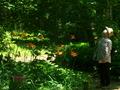 見上げる@京都府立植物園