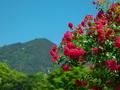 比叡山を望む@京都府立植物園