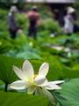 ひっそりと@京都府立植物園