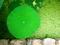 緑の満月@京都府立植物園