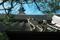 お寺の屋根に猫と松@革堂行願寺