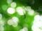 光に幻惑されて@京都府立植物園