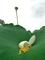 花の終わり@京都府立植物園