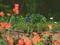 ガラスの中の花園@京都府立植物園