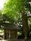 久多大川神社と大杉