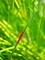 赤い戦闘機@京都府立植物園