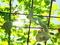 ヘビウリとヒョウタン@京都府立植物園