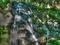 楼門の滝@大文字山