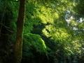 緑の光@大文字山